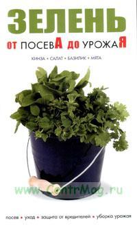 Зелень от посевА до урожаЯ. Кинза, салат, базилик, мята