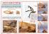 """Комплект плакатов """"Машины для земляных работ"""" (Формат А-3, 4 листа)"""