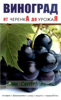 Виноград от черенкА до урожаЯ