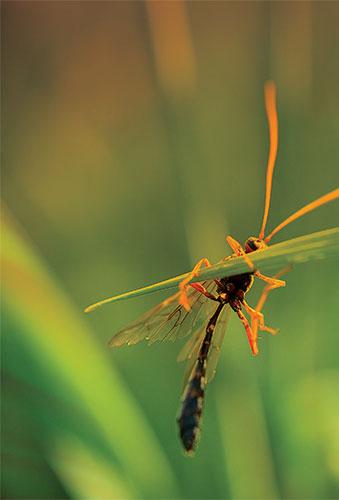 Биоразнообразие : учебное пособие
