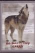 DVD По волчьему следу