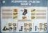 """Комплект плакатов """"Гражданская оборона. Ликвидация чрезвычайных ситуаций"""" (10 листов)"""